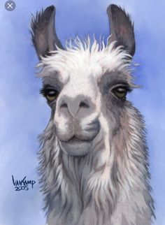 Llama with Blanket Clip Art - Bing images Alpacas, Cute Animal Videos, Cute Animal Pictures, Llama Pictures, Animal Paintings, Animal Drawings, Face Paintings, Llama Peruana, Cute Baby Animals