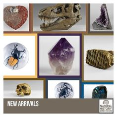 New Arrivals - Shop the collection, website updated daily, click here now www.NaturalHistoryDirect.com