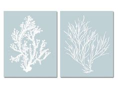 Hey, I found this really awesome Etsy listing at http://www.etsy.com/listing/156632431/palladian-blue-wall-art-coral-print