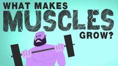 """With all the confusion about the best exercises and methods to get """"swole,"""" many of us buy into complicated training methods, and forget that sometimes simple is best. This video from TED-Ed breaks down the basics of how muscles grow, and how you can help them grow."""