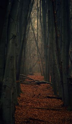 Dark Forest by Den Didenko - Inspired Poetry by T.A. Johnson - Til Nothing More... If no one walks beside you... or invites you for a stroll... from here into eternity... til time no longer flows...
