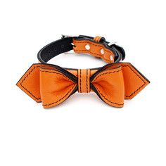 Bowtie Collar XS-L Orange, $55, now featured on Fab.