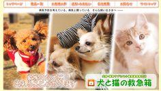 犬と猫の健康をサポートするサプリメントや健康器具専門店『犬と猫の救急箱』|DENAKN 通販サイトを知りたいなら-SHOP MAGAZINE-