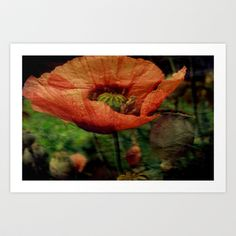 Red paper Poppy Art Print by  Alexia Miles photography - $15.60
