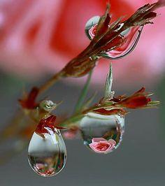 L'uomo veramente pacifico è colui che fra le avversità della vita, conserva la pace nell'anima. (S. Francesco d'Assisi)