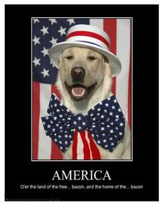 America, home of the bacon funny usa dog patriotic holiday of july july happy of july bacon of july quotes funny of july quotes Fourth Of July Quotes, 4th Of July Images, Funny 4th Of July, Happy 4 Of July, July 4th, I Love Dogs, Puppy Love, Happy Presidents Day, Happy Dogs