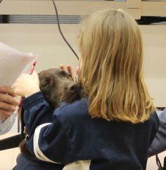 Expertos del Hospital General de Villalba están realizando un ensayo clínico pionero en el mundo para demostrar los beneficios de la terapia asistida con perros en pacientes pediát