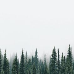 69 Ideas for wild nature forest evergreen Photoshop Wallpaper, Beautiful World, Beautiful Places, Fuerza Natural, Foto Art, Adventure Is Out There, The Places Youll Go, The Great Outdoors, Wonders Of The World