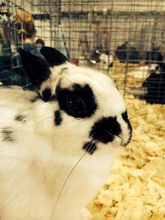 Bunny at the fair