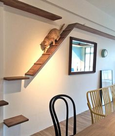 Find varied and practical ideas for the cat climbing wall! – Katze – Find varied and practical ideas for the cat climbing wall! Animal Room, Cat Playground, Playground Design, Cat Climbing Wall, Cat Climbing Shelves, Cat Walkway, Cat Wall Shelves, Shelves For Cats, Cat House Diy