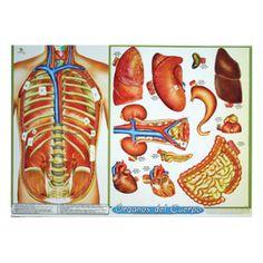 Órganos Del Cuerpo -> http://www.masterwise.cl/productos/6-ciencias/19-organos-del-cuerpo