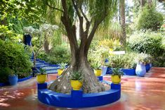 Anisa Sojka travels to Marrakech, Morocco and visits the Jardin Majorelle of Yves Saint Laurent | The garden is covered in palm trees and cactus | Royal blue walls, yellow vases and tiled fountains surround the blissful space