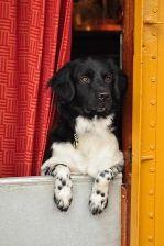 Ships Dog Sirius on board Bark EUROPA