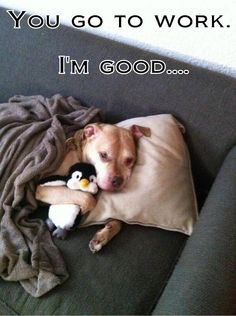 What the dog does when you leave ;-)  For the Love of Dogs, LLC, FB