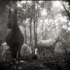 Horse Photography: Monica Stevenson