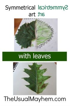art with leaves Symmetrical art with leaves: an excellent nature study or form drawing lesson, or just a fun fall art lesson for kids!Symmetrical art with leaves: an excellent nature study or form drawing lesson, or just a fun fall art lesson for kids! Form Drawing, Nature Drawing, Drawing Art, Outdoor Education, Outdoor Learning, Autumn Nature, Autumn Art, Science Art, Science And Nature