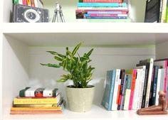 benefits to having house plants