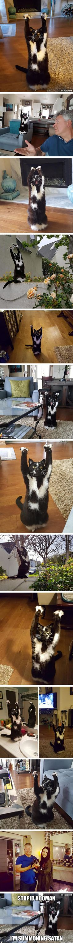 This Cat Keeps Putting Its Paws In The Air And Nobody Knows Why <<-- He's probably saying :Hello! How much more of hint do you need for me to picked up?""