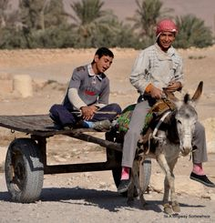 Transportation: To get from farm to farm in Syria they use donkeys. they put a table attached to a donkey and put the products on the table.
