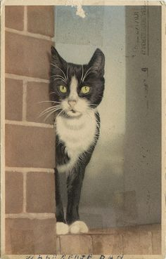 Cat On A Corner via the ghost of me (postcard sent in 1956)