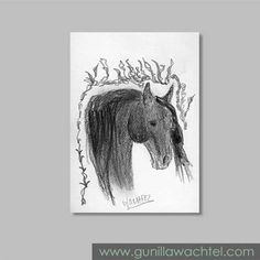 ACEO Horse Sketch Original Pencil Drawing