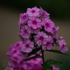 #flowersandmacro #flower #summer #beautiful #flowers