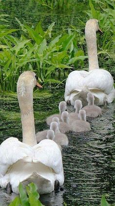 Beautiful family, humans could learn from this.