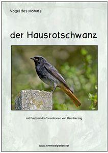 Vogel des Monats: der Hausrotschwanz