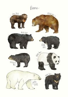 "31 Beautiful Posters That Will Teach You A Damn Thing - A print that asks the q. - watercolor - 31 Beautiful Posters That Will Teach You A Damn Thing – A print that asks the question ""Which - Animal Drawings, Art Drawings, Drawings Of Bears, Animal Art Prints, Animal Posters, Art D'ours, Spectacled Bear, Sloth Bear, Beautiful Posters"