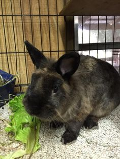 Meet Bungee! This cutie is fixed, litter trained, and waiting for his forever home!