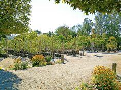 Wer jetzt pflanzt spart sich viel gießen, denn nächste Woche kommt der Regen!   #garten #blumen #pflanzen #gärtner #gärtnerei #sommer #herbst #gartenliebe #blütenmeer #kriegergut #baumschule #perg #schwertberg #leonding #linz #amstetten #naarn #mauthausen Dolores Park, Travel, Landscape Nursery, Landscape Diagram, Planting Flowers, Linz, Rain, Autumn, Summer