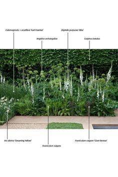 Urban Gardening, post project 4997577308 for a truly stunning Garden, post layou… Shade Garden, Garden Plants, Leafy Plants, Green Garden, Back Gardens, Outdoor Gardens, Planting Plan, Mediterranean Garden, Contemporary Garden