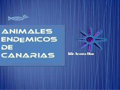 Animales endémicos de canarias