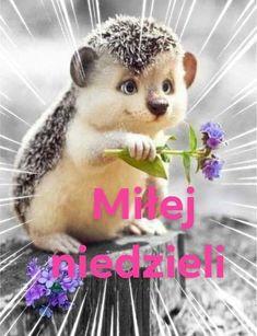Polish, Disney, Animals, Good Morning, Night, Pictures, Vitreous Enamel, Animales, Animaux
