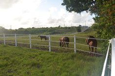 Walk along the pasture, enjoy the fresh air, chat with the horses :-)