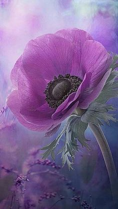 Purple flowers are a great way to add interest to your yard or landscape. See some of our favorite purple garden flowers! Purple Poppies, Purple Flowers, Wild Poppies, Art Floral, All Things Purple, Trees To Plant, Watercolor Flowers, Flower Art, Anemone Flower