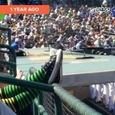 One year ago to Im pretty sure it was @funsize83xo who spotted me & took this pic! But I will be doing exactly this only at HoHokam instead of Phoenix Muni on Thursday! #LetsGoOakland #OaklandSockSwag #OaklandAsSocksGirl #IHellaLoveOakland #Athletics #SpringTraining #CactusLeague