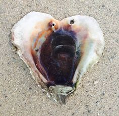 """""""Found this on my last walk on the beach in Mexico this morning, fresh from the incoming tide. The message from Grandmother Ocean: """"Regardless of what's going on in this world, try to keep living from your heart. The world needs your medicine."""" A-ho!"""" - Glenda Goodrich, finder & photographer"""