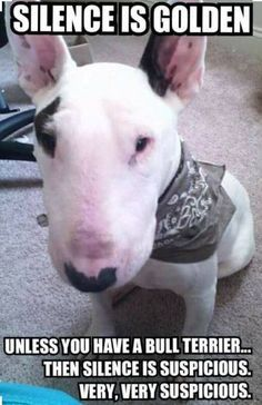 Bull Terrier quotes