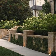 Low wall lined with Boxwoods (?) and hydrangea
