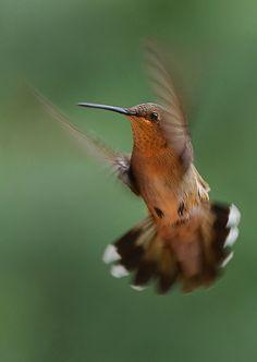humming bird --Birds in general.. I'm going through a bird loving phase.