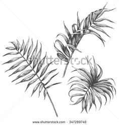 Hand drawn branches and leaves of tropical plants.  Palm leaves isolated on white background. - stock vector