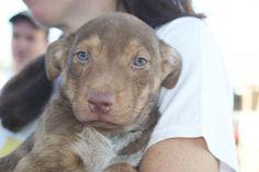 Adoção de cães e gatos em Jacarepaguá • Barrazine