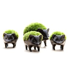 plant and ceramic hedgehogs