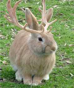 The town of Douglas, Wyoming, has declared itself to be the Jackalope capital of…