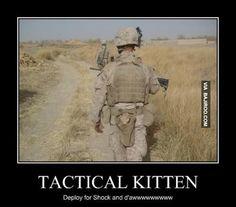 kitten memes - Google Search