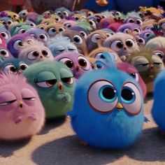 Today is the day! Bring home the #AngryBirdsMovie on Blu-ray to watch with your #hatchlings (link in bio)