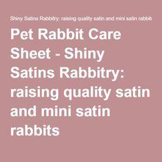 Pet Rabbit Care Sheet