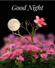 full moon in lil flowers Good Night Messages, Good Night Wishes, Good Night Quotes, Night Qoutes, Good Night Flowers, Mystic Moon, Story Instagram, Good Night Image, Beautiful Moon