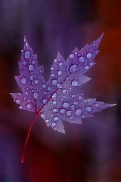 Beautiful Flowers Wallpapers, Beautiful Nature Wallpaper, Cute Wallpapers, Beautiful Images, Flower Wallpaper, Wallpaper Backgrounds, Autumn Leaves Wallpaper, Art Painting Gallery, Leaf Art